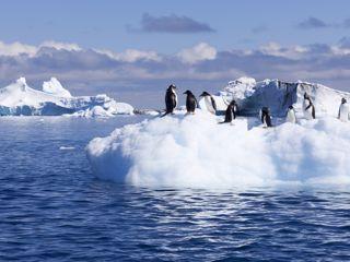 Crociere Antartide