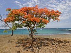 Croisières Baltra, Galapagos